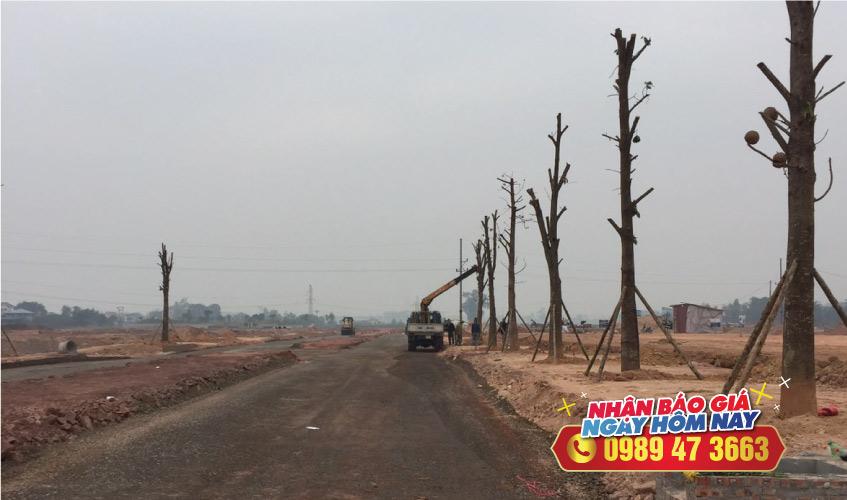 Hàng cây xa la khu đô thị việt hàn